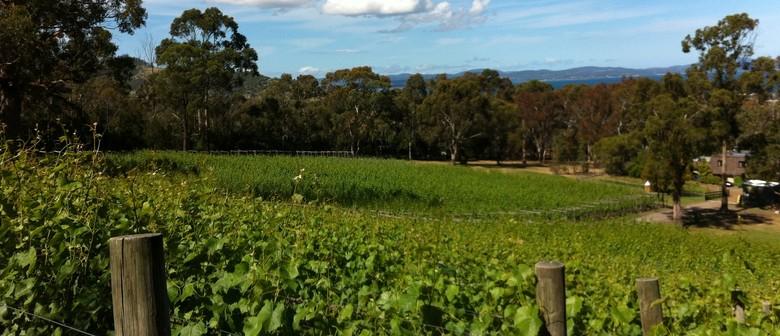 Tasmanian Wine Tasting