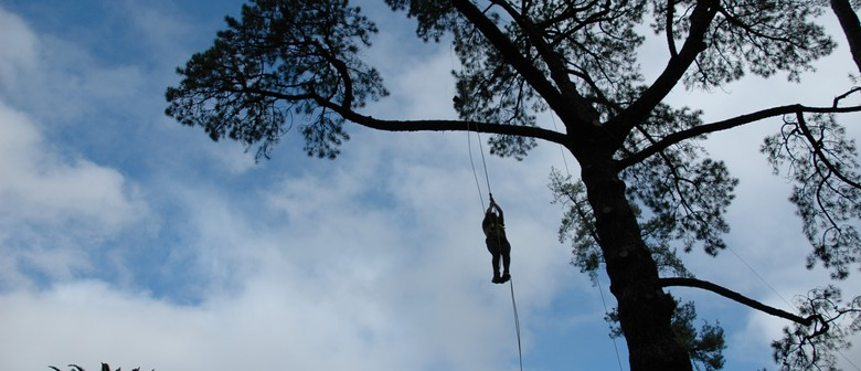 Tree Climbing Championships
