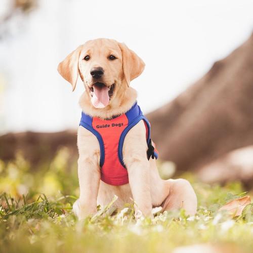 Guide Dogs Rockhampton Cent Sale
