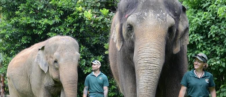 Breakfast With The Elephants