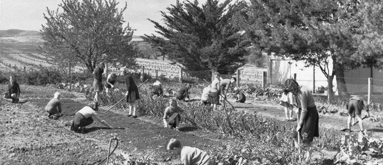 Losing The Plot: Food Gardening In South Australia