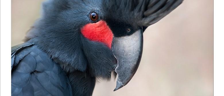 Feathered Heads - A Celebration Of Australian Birds