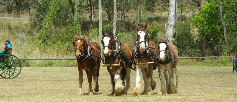Central Queensland DraughT Horse Heavy Horse Heritage Day