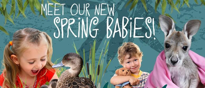 Spring Babies