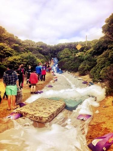 Foki King Island