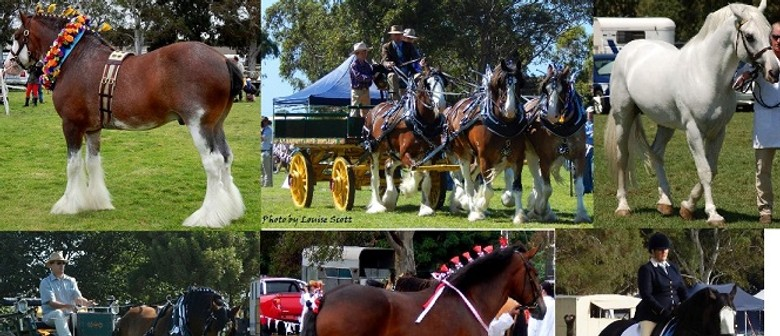 9th National Clydesdale & Heavy Horse Festival