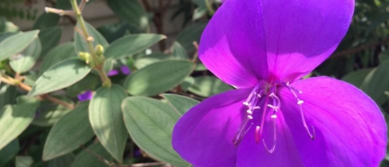 Gardening Workshops - Propagation, Perennials and Annuals