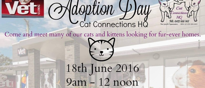 Cat Connections HQ Adoption Day