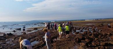 Long Reef Aquatic Reserve Guided Walk