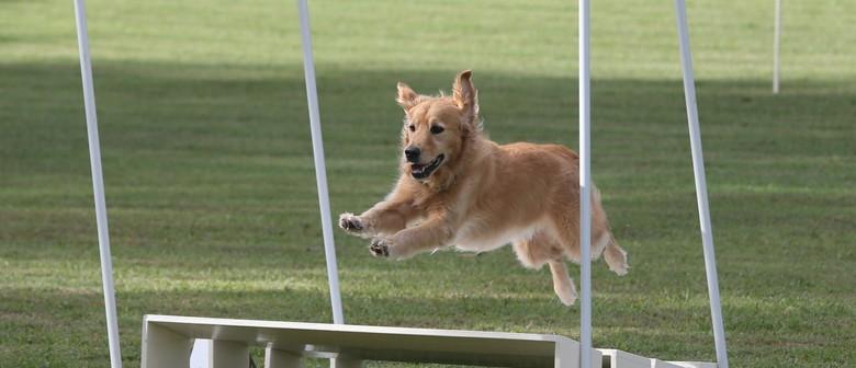 Dog Sports On Show