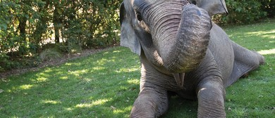 Exercise for Elephants