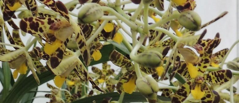 Aspley Orchid Society – Mothers' Day Celebration