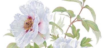 Ongoing Beginners Botanic Art Workshop