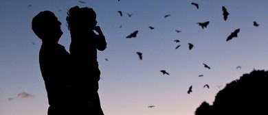 Winter Spotlight Prowl