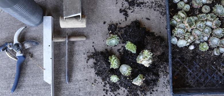 Mr Fancy Plants – Happy House Plants Workshop