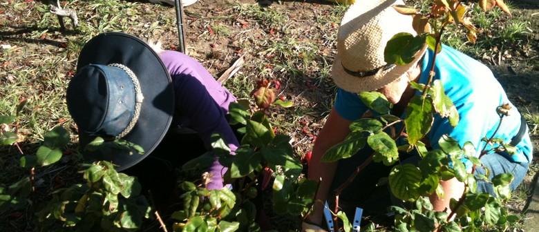 Rose Pruning and Gardening Workshops