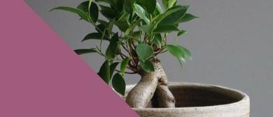 Ceramic Planter Workshop With Sarah Schembri