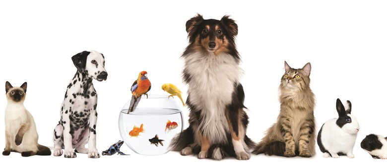 Taking Care of Your Pets Now and Into the Future