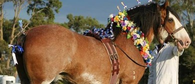 2018 National Clydesdale and Heavy Horse Festival