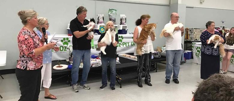Semi Longhair Cat Show