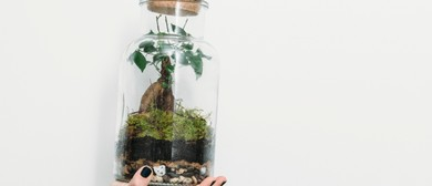 Tarkine Forest Terrarium Workshop