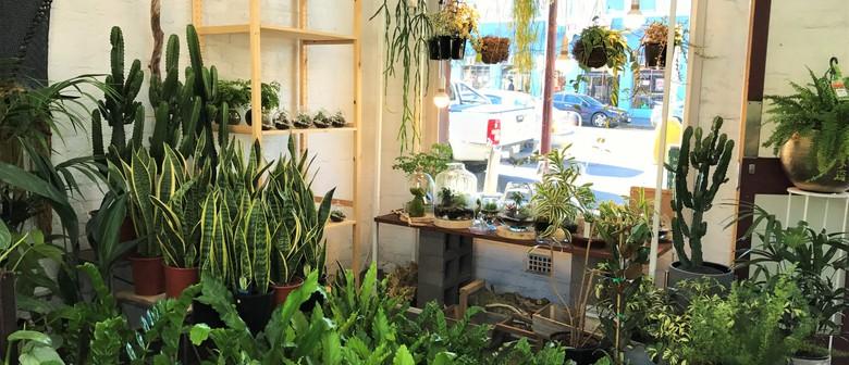 Indoor Plant Sale Event