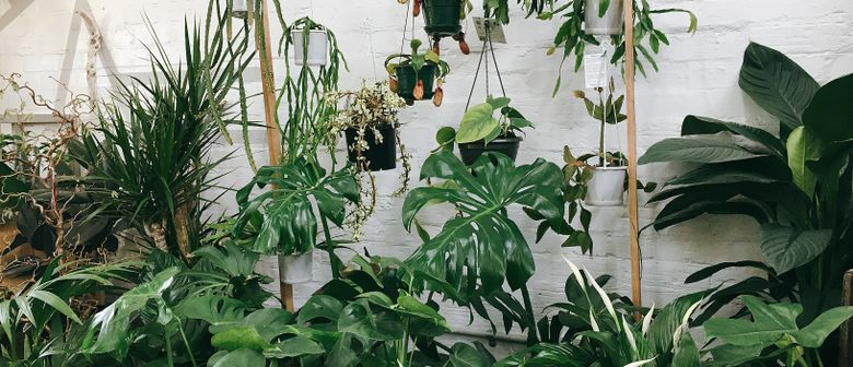 Plant Sale Night Party