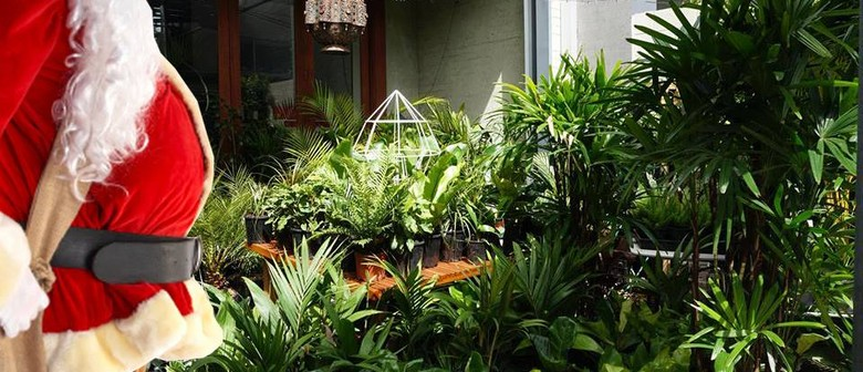 Indoor Plant Warehouse Sale – Christmas Special