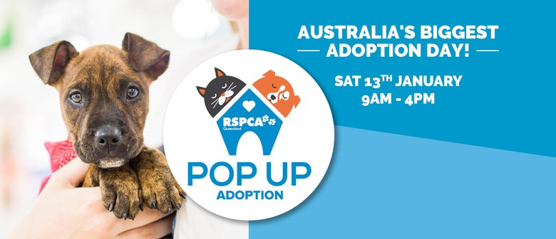 RSPCA Pop Up Adoption 2018