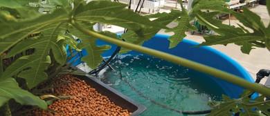 Beginners Aquaponics Course