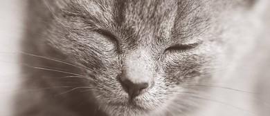 Meowndfulness Meditation