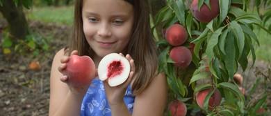 Peach and Nectarine Season