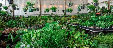 Huge Indoor Plant Sale – Philodendron Safari Party