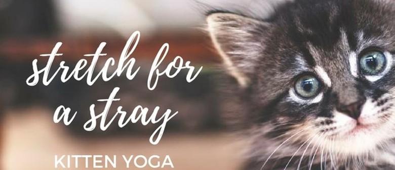 Kitten Yoga Pop-Up Adoption Day