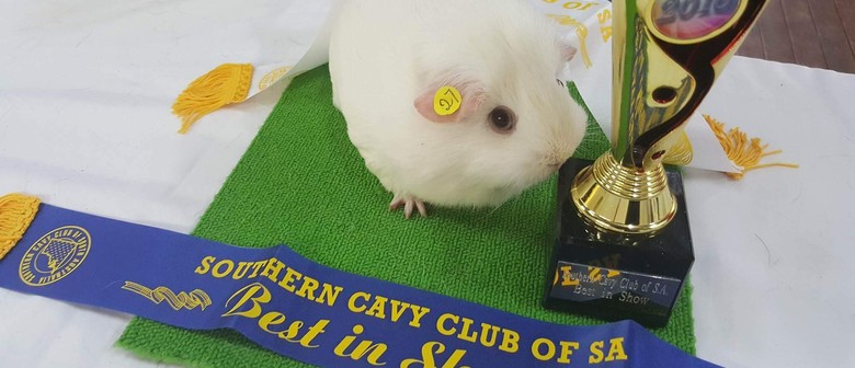 Southern Cavy Club Annual Show