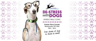 Gap SA De-Stress With Dogs Clinic
