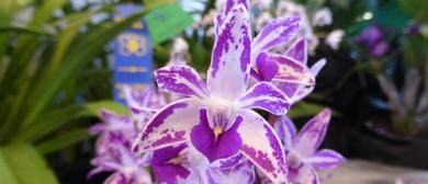 Ballarat Orchid Show 2018