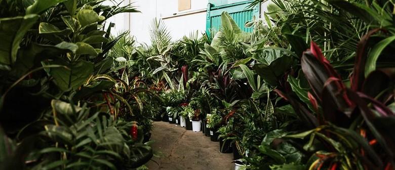 Huge Indoor Plant Warehouse Sale – Foliage Fiesta