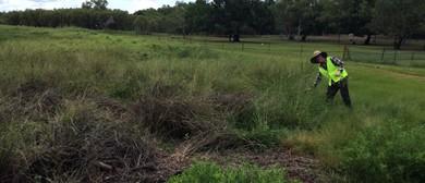 McMinns Lagoon Wetland Restoration