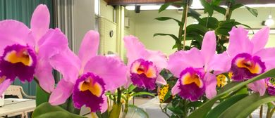 North Moreton Qld Orchid Council Inc. Summer Orchid Show