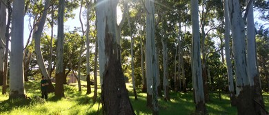 Forest Bathing Walk for National Tree Week