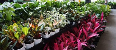 Indoor Plant Warehouse Sale – Springtime Jungle