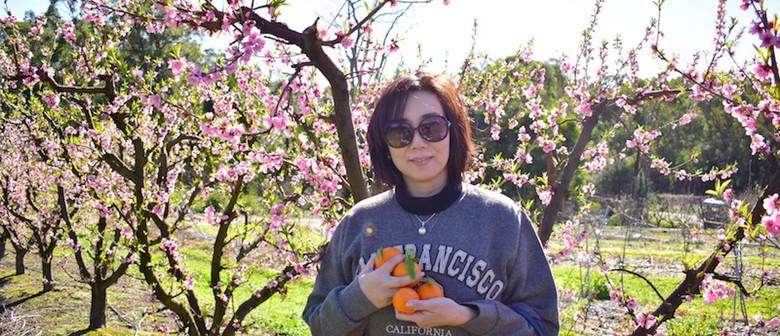 Blossom Season Farm Tours