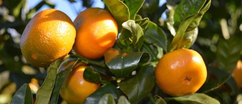 Marvellous Mandarin Season