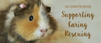 QLD Guinea Pig Refuge's 5th Birthday Celebrations