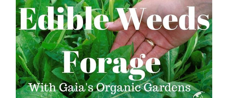 Edible Weeds Forage