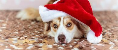 Christmas Pet Photo Event