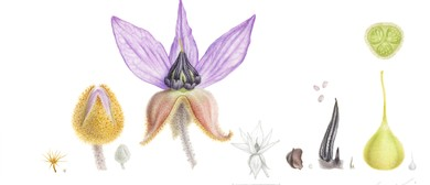 Illustrating Plant Dissections Botanic Art Workshop