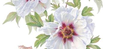 Considering Shadows and Shade Botanic Art Workshop