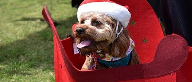 Santa Paws At the Park